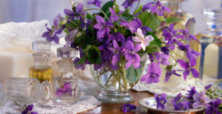 Violets in Glass Vase and Old Glass Perfume Bottles on Wooden Table with Lace Cloth